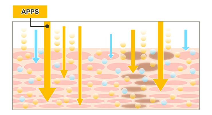 新型ビタミンC誘導体の特徴