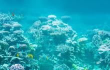 サンゴ礁イメージ