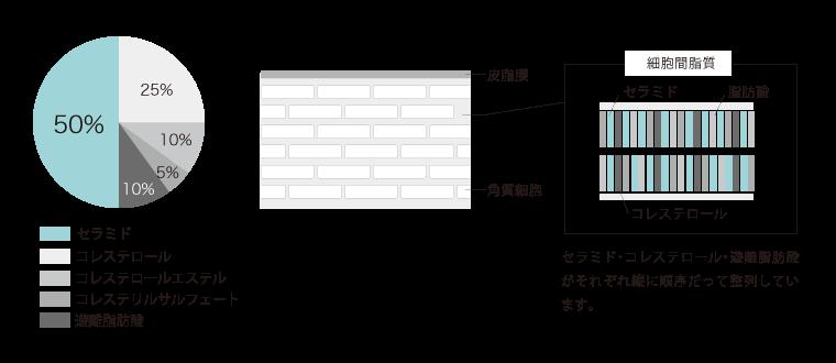 セラミド・コレステロール・遊離脂肪酸・コレステロールエステルがそれぞれ縦に順序だって整列しています。